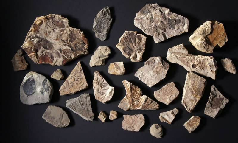 Fossil trove shows life's fast recovery after big extinction